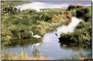 biological and environmental monitoring